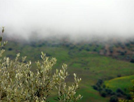 Wenn Nebel dich einhüllt und dir Frieden schenkt…