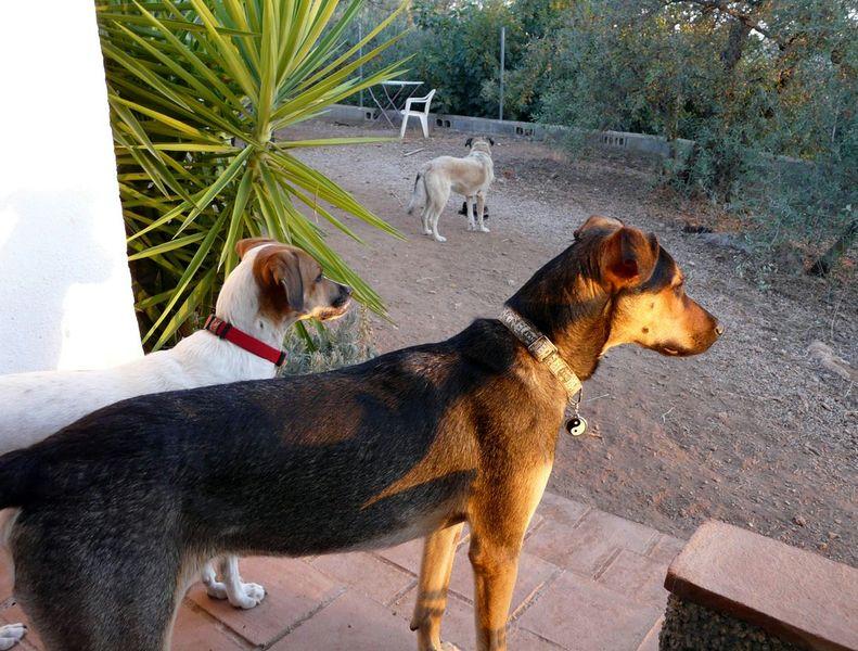 Dankbarkeit & Glück - Hundeglück